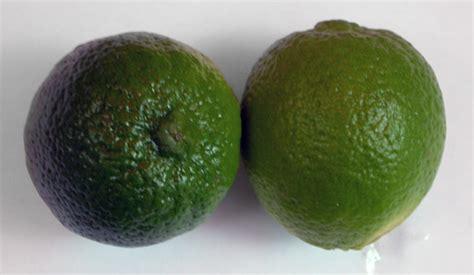 citron citrus limon