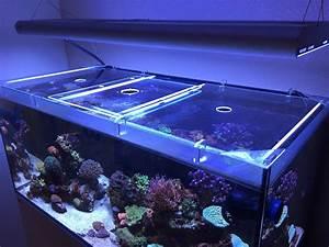 Plexiglas Aquarium Nach Maß : welches plexiglas f r abdeckung led beleuchtung dein ~ Watch28wear.com Haus und Dekorationen