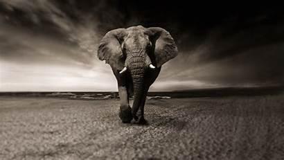 Elephant 4k African Wallpapers Laptop Chromebook
