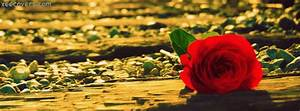 Lonely Love Rose FB Cover Photo – Xee FB Covers