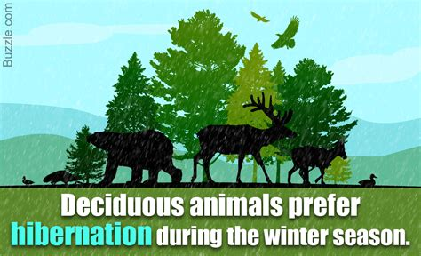 The Variety of Deciduous Forest Animals is Truly Mind Boggling