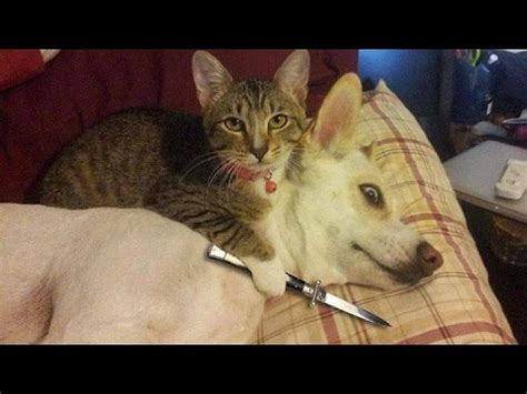 Funny Cats Vs Dogs Compilation Youtube
