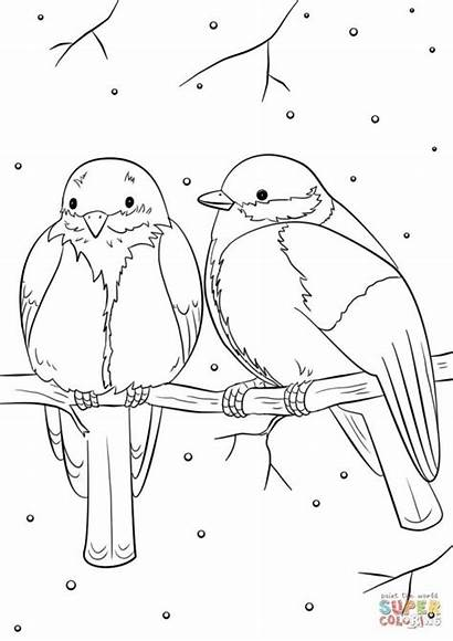 Coloring Birds Winter Bird Pages Printable Drawing