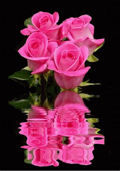 Roses Rose Reflection Animated Pink Water Animation