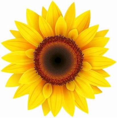 Sunflower Transparent Freepngimg