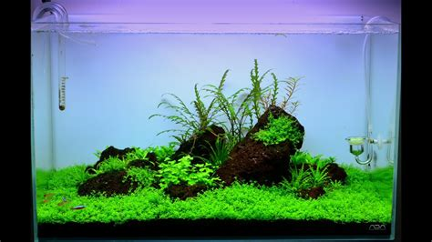 Aquascape Ada - maintenance aquascape ada 60 p quot hill quot
