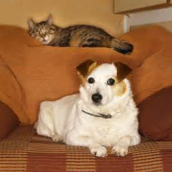 do cats understand words do you the state of your pet s health banfield does