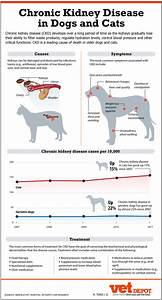 Renal Failure In Cats  U2013 Cat And Dog Lovers