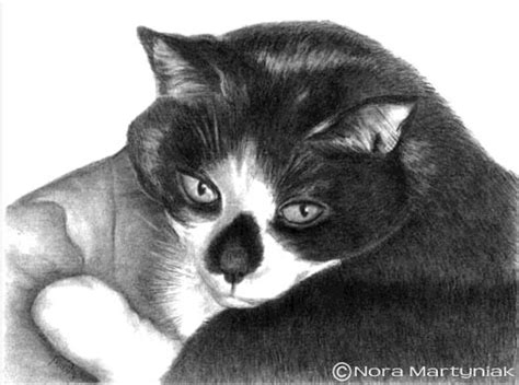 drawing realistic pets  photographs step  step art