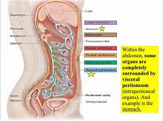 21 Digestive System #1