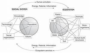 32 best Ecosystems (systems thinking) images on Pinterest ...
