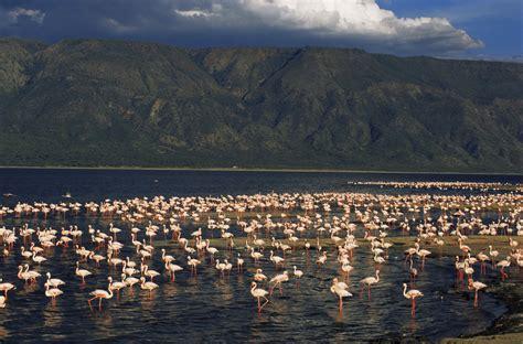 lake natron places  visit  lake natron tanzania