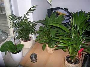 Welche Erde Für Palmen : anf nger mit vielen fragen zu zimmerpalmen seite 1 palmen ~ Watch28wear.com Haus und Dekorationen