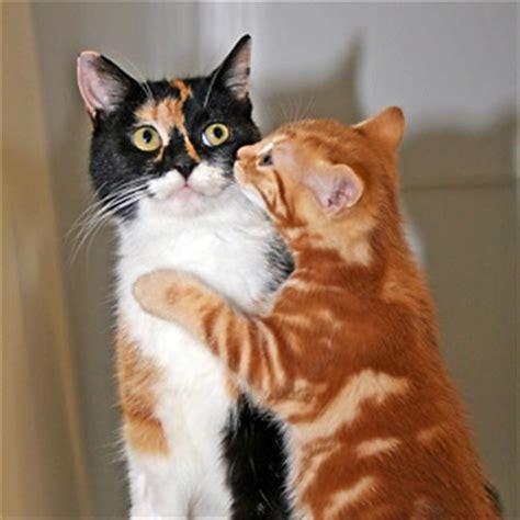 Kaķu fakti. - Spoki