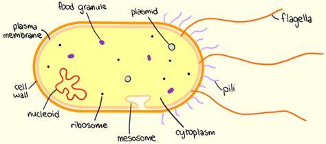 Prokaryotic Cells Biology