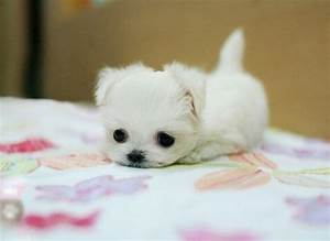 """Super Cute Baby Puppy Pictures - Get Ready to Say """"Awww ..."""