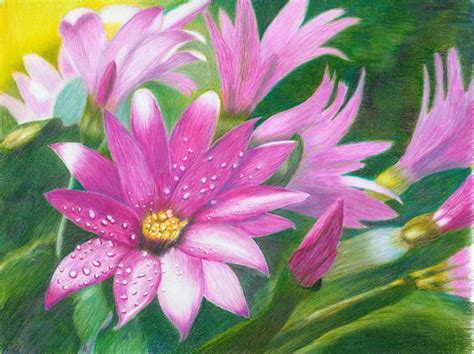 Coloring Flowers With Colored Pencils by Gallery For Gt Colored Pencil Drawings Of Flowers Abstract
