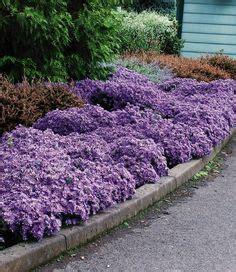 die  besten bilder von garten bodendecker garden plants landscaping und backyard patio