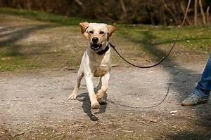 Mietwohnung Mit Hund : verhalten lernen sie hunde zu verstehen ~ Lizthompson.info Haus und Dekorationen