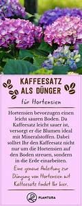 Kaffeesatz Als Dünger : kaffeesatz als d nger verwendung vorteile kaffeesatz ~ Watch28wear.com Haus und Dekorationen