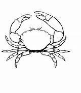 Crab Coloring Stone Pages Drawing Printable Crabs Outline Animal Drawings Simple Colouring Template Animals Animalplace Patterns Fish Fun Pattern Painting sketch template