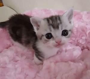 baby kitten gif | Tumblr