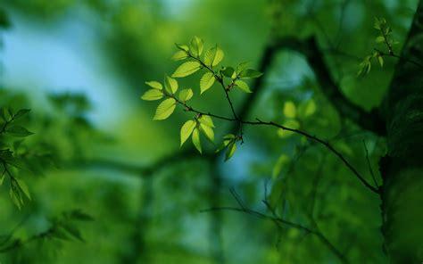 green tree mac wallpaper  allmacwallpaper