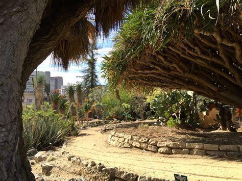 desert garden mildred  mathias botanical garden