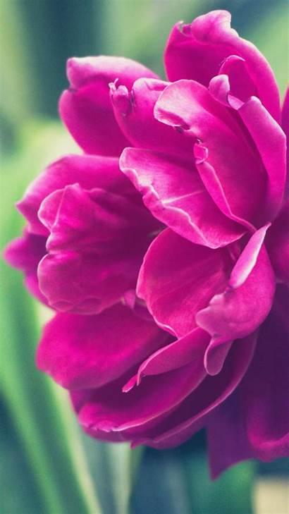 Peony Pink Petals Bud 2560 1440 Setaswall