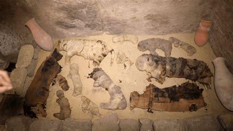 archeologists discover dozens  cat mummies  ancient