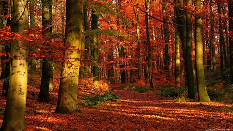 Autumn Season Hd Wallpapers by Hd Autumn Wallpaper Hd Wallpaper