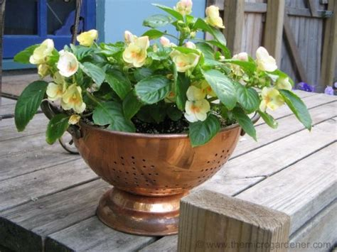 plant containers ideas clever plant container ideas the micro gardener
