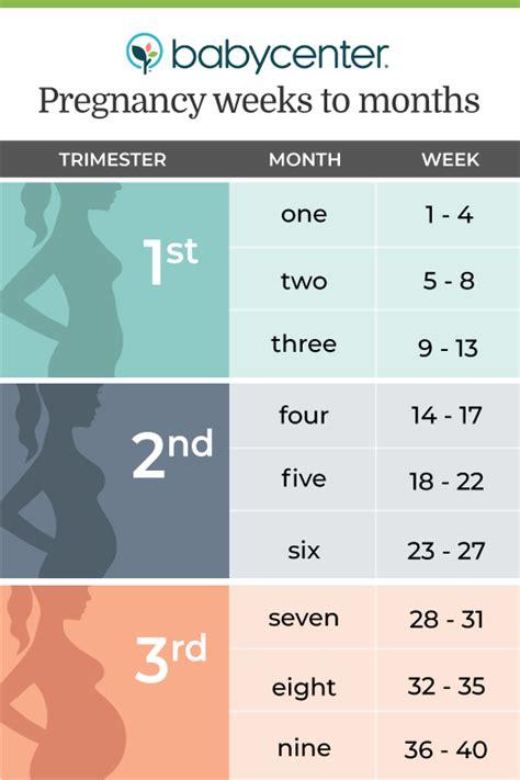 count  pregnancy  weeks  months
