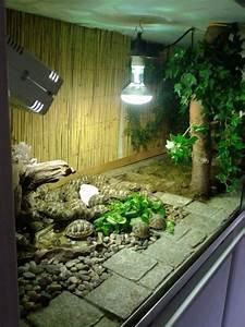 Pflanzen Terrarium Einrichten : schildkr ten shop das terrarium ~ Orissabook.com Haus und Dekorationen
