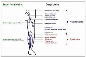 Pin By Ultrasound Blogger On Ultrasound Vascular