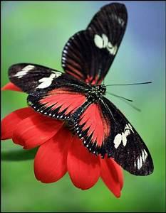 Kleine Fliegen In Blumen : 260 besten schmetterlinge bilder auf pinterest ~ Lizthompson.info Haus und Dekorationen