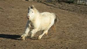 Fluffy Horses