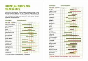 Welche Pflanzen Vertragen Sich Tabelle : sammelkalender herbalista ~ Lizthompson.info Haus und Dekorationen