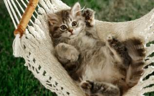 just cats just chilling out cats wallpaper 36977164 fanpop