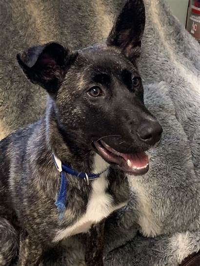 Hazel Dog Breed Cross Month Female Adoption