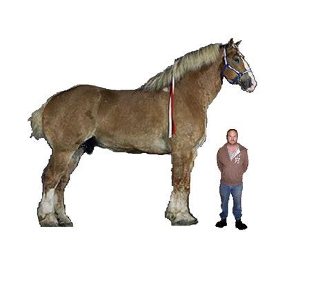 horse giant installations museum megafauna