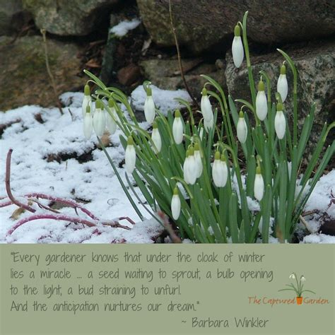 Gardeners Winter by The Cloak Of Winter Lies A Miracle The Captured Garden