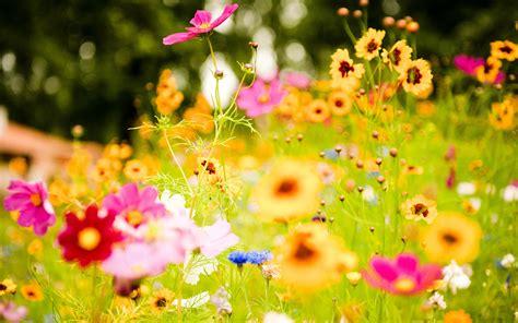 bright flowers vivid flowers wallpapers hd wallpapers id 11456
