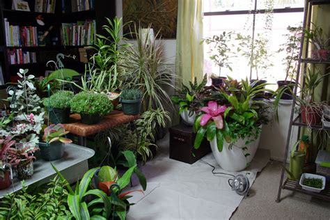 Indoor Gardening :  How To Plant A Garden... Indoors