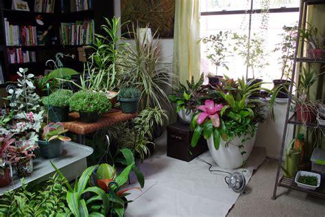 The Rainforest Garden How To Plant A Garden Indoors