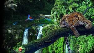 Hd, Jungle, Desktop, Backgrounds