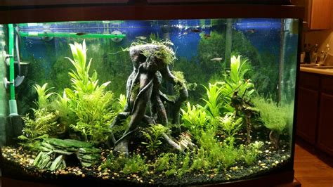 Wars Aquarium Decorations by Want To Do A Wars Themed Tank The Planted Tank Forum