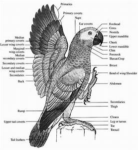 92 Best Bird Anatomy Images On Pinterest