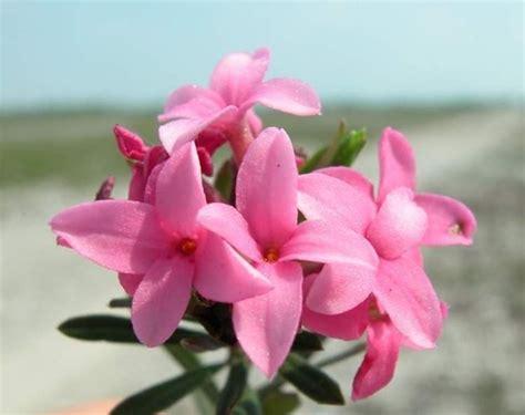 elenco nomi fiori fiori primaverili elenco fiori per cerimonie fiori di