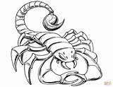 Scorpion Coloring Prehistoric Drawing Printable Scorpions Cartoon Getdrawings Tail Paper Skip Under Simple Neo Argo Categories sketch template